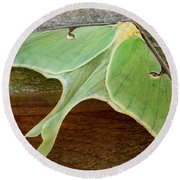 Maryland Luna Moth Round Beach Towel
