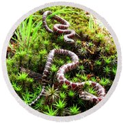 Maryland Milk Snakes Verticle Round Beach Towel