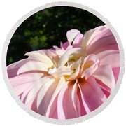 Master Gardener Pink Dahlia Flower Garden Art Prints Canvas Baslee Troutman Round Beach Towel