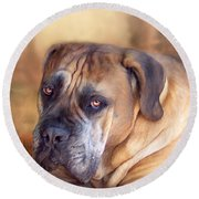 Mastiff Portrait Round Beach Towel by Carol Cavalaris