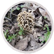 May Morel Mushroom Round Beach Towel