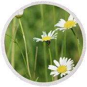 Meadow Detail White Wild Flowers Round Beach Towel