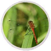 Meadowhawk Dragonfly Round Beach Towel