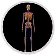 Medical Illustration Of Female Skeleton Round Beach Towel