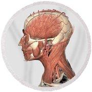 Medical Illustration Showing Human Head Round Beach Towel