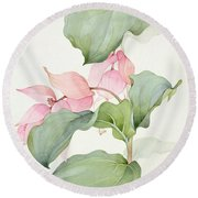 Medinilla Magnifica Round Beach Towel by Sarah Creswell