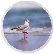Mediterranean Gull Ichthyaetus Melanocephalus Round Beach Towel
