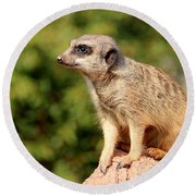 Meerkat 1 Round Beach Towel