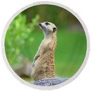Meerkat Round Beach Towel
