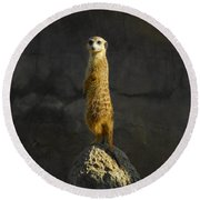 Meerkat On The Watch Round Beach Towel