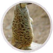 Meerkat Portrait Round Beach Towel