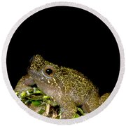 Mehu�n Green Frog Round Beach Towel
