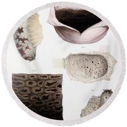 Melanoma, Blood And Stomach Round Beach Towel