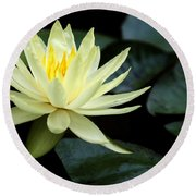 Mellow Yellow Water Lily Round Beach Towel