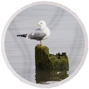 Mew Gull On A Piling Round Beach Towel