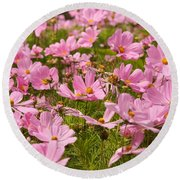 Mexican Aster Flowers 1 Round Beach Towel