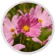 Mexican Aster Flowers 2 Round Beach Towel