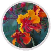 Mexican Bird Of Paradise  Round Beach Towel