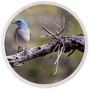Mexican Jay Round Beach Towel