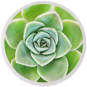 Mexican Snowball Succulent  Round Beach Towel
