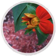 Mexican Sunflower In Mid Bloom Round Beach Towel