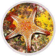 Mexico, Gulf Sea Star Round Beach Towel