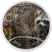 Michigan Raccoon Round Beach Towel