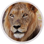 Mighty Lion In South Africa Round Beach Towel