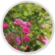 Miniature Fuchsia Roses Round Beach Towel