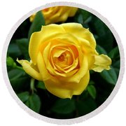 Miniature Yellow Rose Round Beach Towel