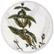 Mint Plant, 1735 Round Beach Towel