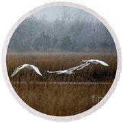 Misty Mute Swans Soaring South Jersey Wetlands Round Beach Towel