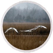 Misty Mute Swans Soaring South Jersey Wetlands Round Beach Towel