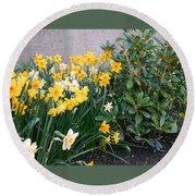 Mixed Daffodils Round Beach Towel