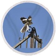 Mockingbird Landing On Fence Round Beach Towel