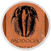 Modocia Typicalis Fossil Trilobite Round Beach Towel
