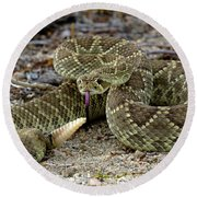 Mohave Green Rattlesnake Striking Position 3 Round Beach Towel