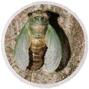 Molting Cicada #2 Round Beach Towel
