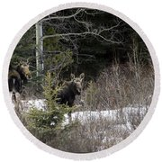 Mom And Calf  In The Forest Round Beach Towel