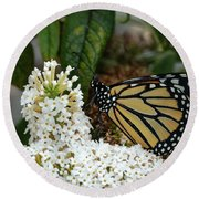 Monarch And The Butterfly Bush  Round Beach Towel
