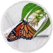 Monarch Butterfly In The Garden 3 Round Beach Towel