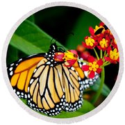 Monarch Butterfly At Lunch With 2 Box Elder Bugs Round Beach Towel