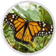 Monarch Butterfly II Round Beach Towel