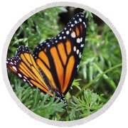 Monarch Butterfly In Lush Leaves Round Beach Towel