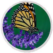 Monarch Butterfly On Flower Blossom Round Beach Towel