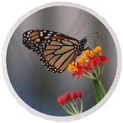 Monarch Butterfly On Milkweed Round Beach Towel