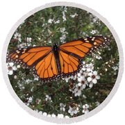 Monarch Butterfly On New Zealand Teatree Bush Round Beach Towel