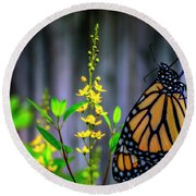 Monarch Butterfly Poised On Green Stem Among Yellow Flowers Round Beach Towel