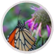 Monarch Butterfly Posing Round Beach Towel