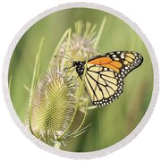 Monarch On A Thistle  Round Beach Towel